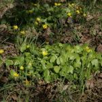 Pavasariniai švitriešiai