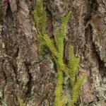 Pataisas varinčius šliaužia medžio kamienu