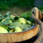 rauginti-obuoliai