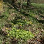 Pavasariniai švitriešiai parke