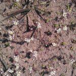Pavasarinės aktyvės