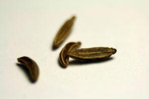 Kmyno sėklos