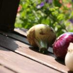 Valgomasis svogūnas