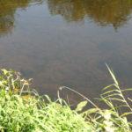 Žuvys vandenyje