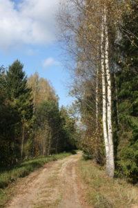 Rudenėjantis miškas
