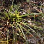 Miško žvėrys nieko nelaukę ragauja šviežios žolės