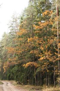 Pamiškė rudenį