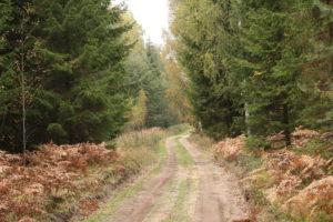 Rudenėjantis miško kelias