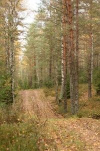 Rudeniškas miško keliukas