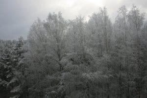Apšerkšniję medžiai