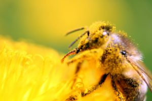 Bitė žiede