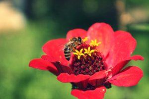 Bitės reikalai