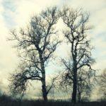 Fotogeniški medžiai