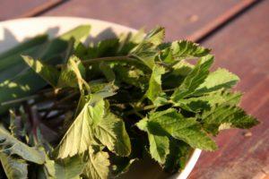 Garšvų lapai paruošti salotoms