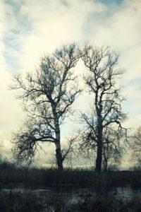 Medžiai prie upės