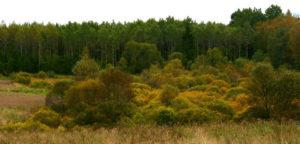 Miškai ir krūmai rudeniškai keičia spalvas
