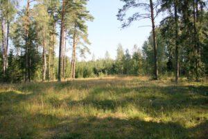 Miško aikštelė