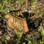Miško pasisavintas batas