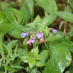 Neatpažintas augalas 2