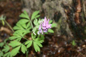 Neatpažintas augalas 3