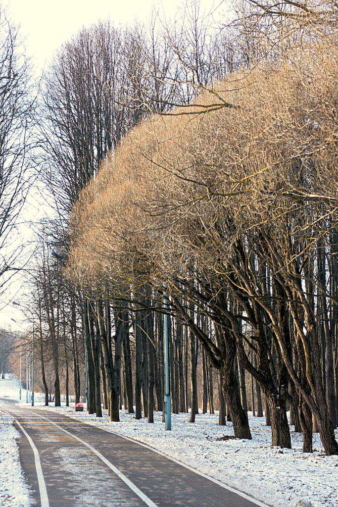 Parkas žiemą