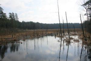 Pelkėjantis ežeras