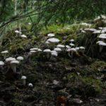 Ratu augę grybai iš arčiau