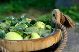 Rauginami obuoliai