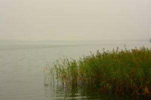 Rytinis rūkas virš ežero