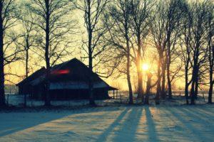 Saulė medžiuose