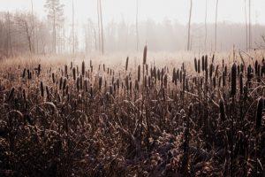 Šlapias miško kirtimas