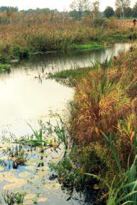 Upelis pelkėje
