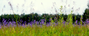 Vasariška pieva