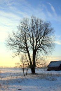 Žiemos vaizdelis
